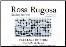 ROSA RUGOSA - Filet Lace Pattern